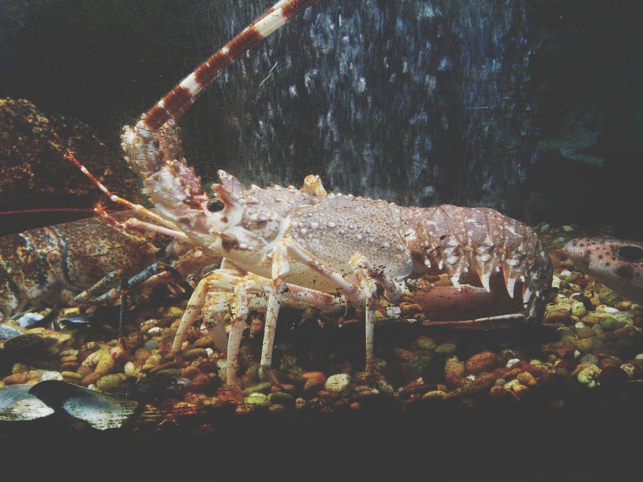 Seafood Restaurant Seafoodporn Seafoods Mariscos Marisco Marisqueria Marisqueira Aquarium Aquarium Life Aquatic Life Food Porn Food Photography Food On The Go Food Foodporn