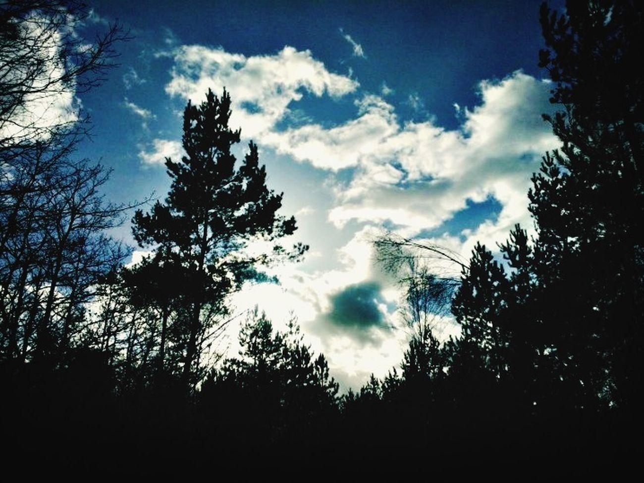 Nature En Foret Ciel