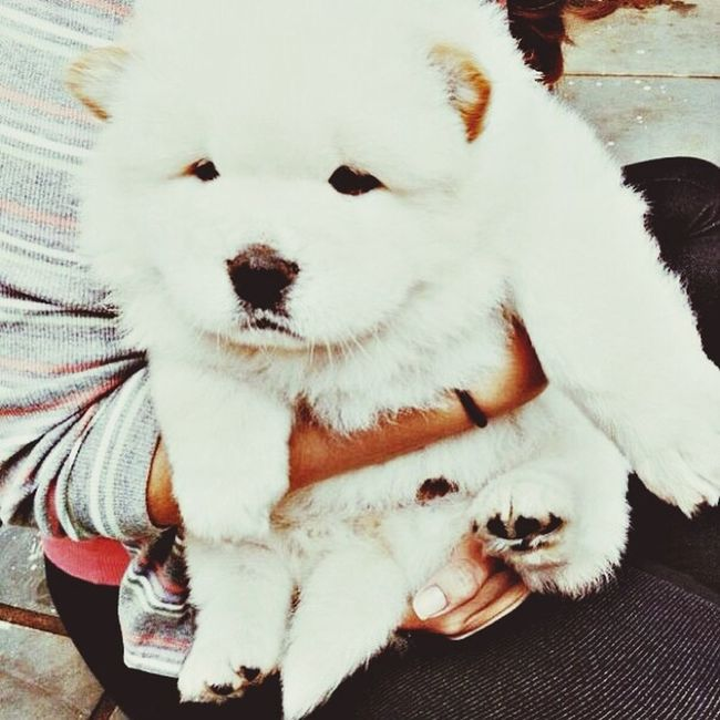 Puppy Like Cute Adorable I Love It