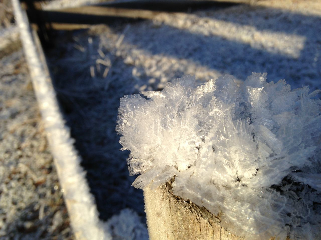 Close-up Cold Temperature Day Focus On Foreground Frozen Ice Leaves No People Outdoors Snow Winter
