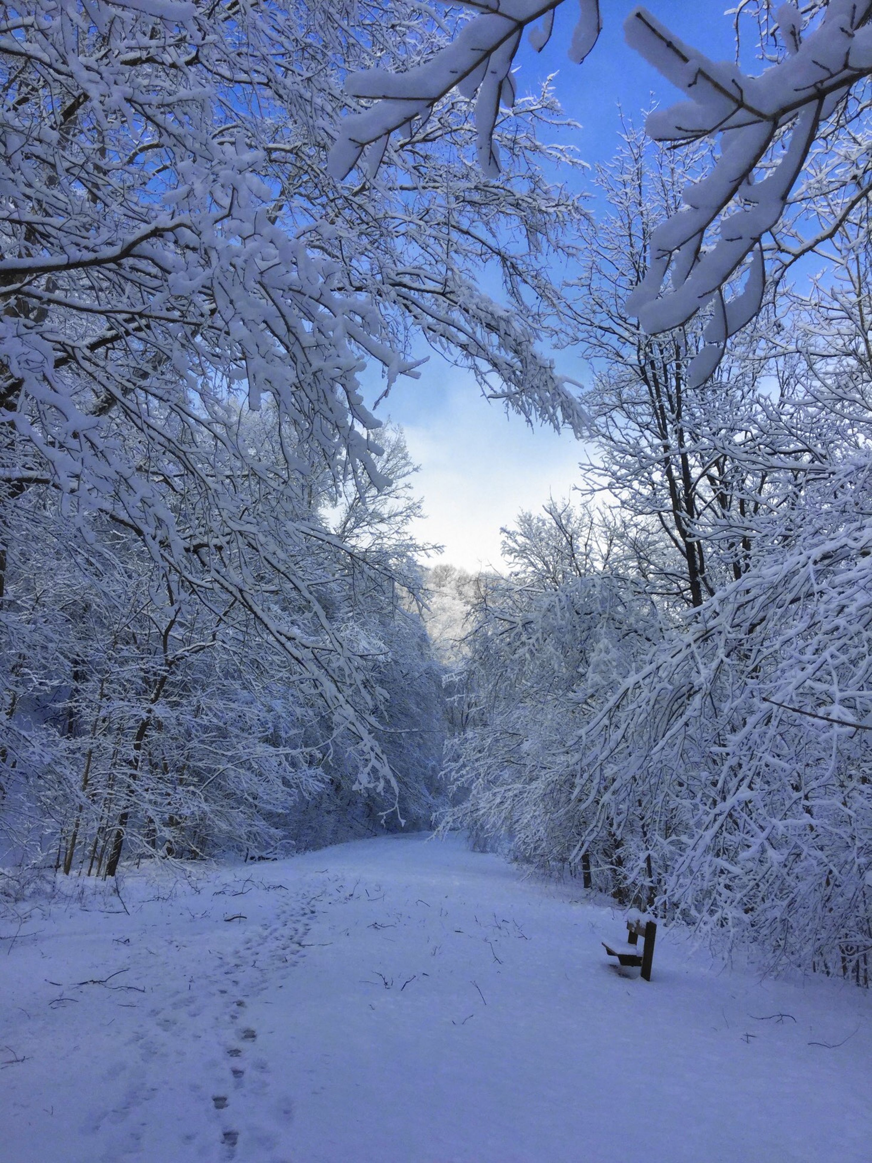 winter, cold temperature, snow, tree, nature, beauty in nature, day, outdoors, no people, sky