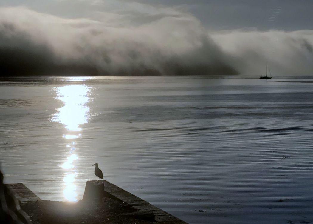 Seagull and sailboat watching approaching fog. One Animal Sea Bird Seagull Water Cloud - Sky Monterey Bay Horizontal Fog Bank Fog Sailboat