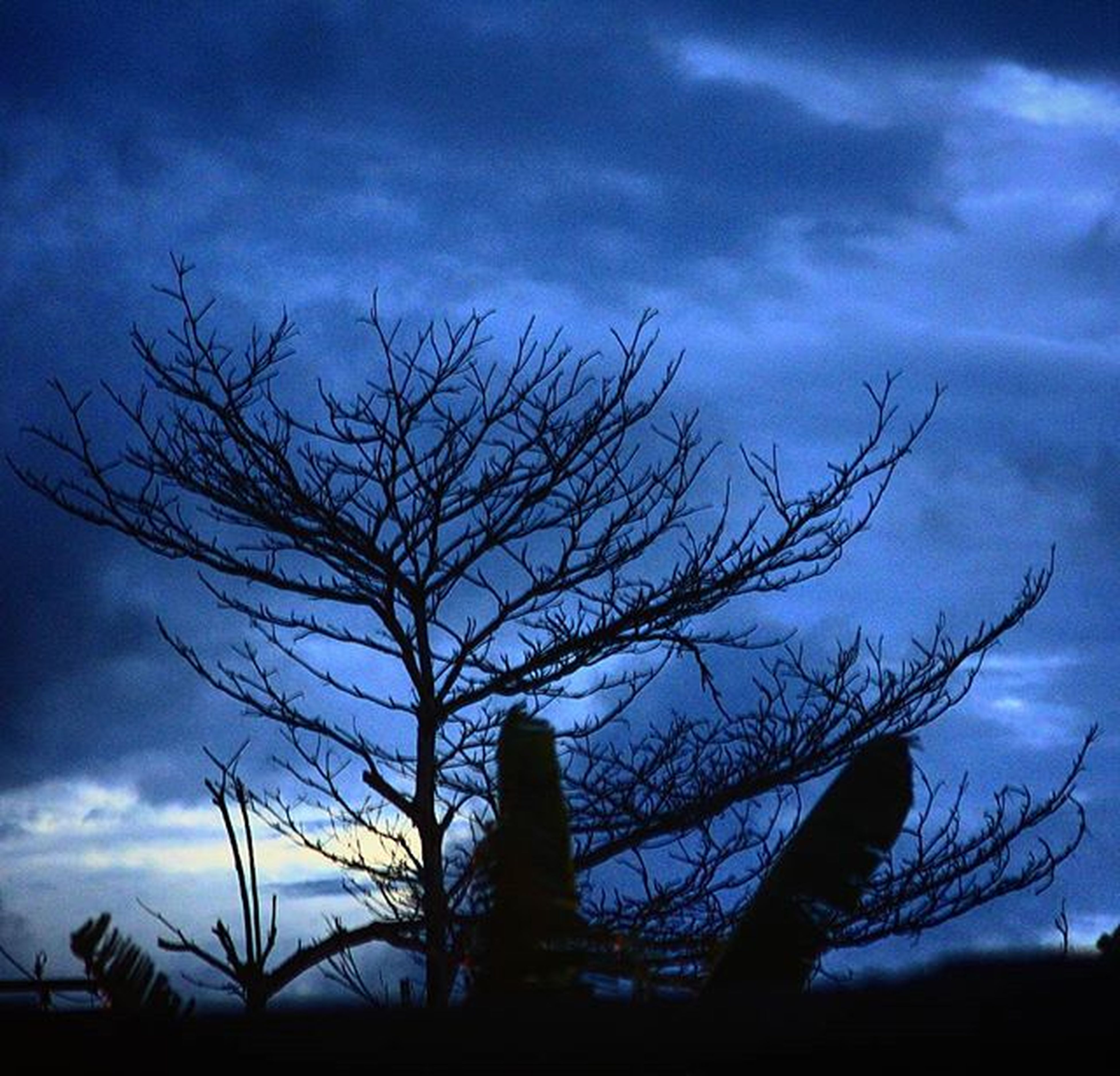 bare tree, low angle view, silhouette, branch, sky, tree, cloud - sky, tranquility, nature, cloudy, cloud, beauty in nature, dusk, scenics, tree trunk, outdoors, tranquil scene, no people, sunset, blue