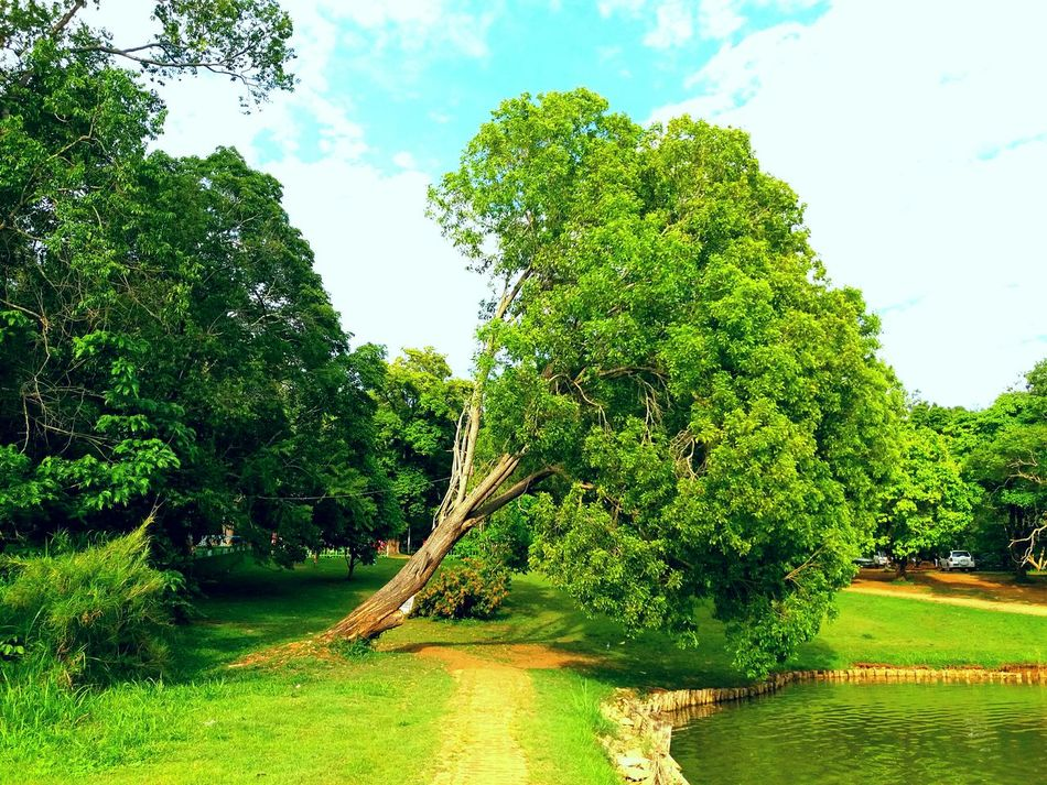 Pyin Oo Lwin Tree And Nature Stuggle For A Living Encouraging_by_Tree first eyeem photo