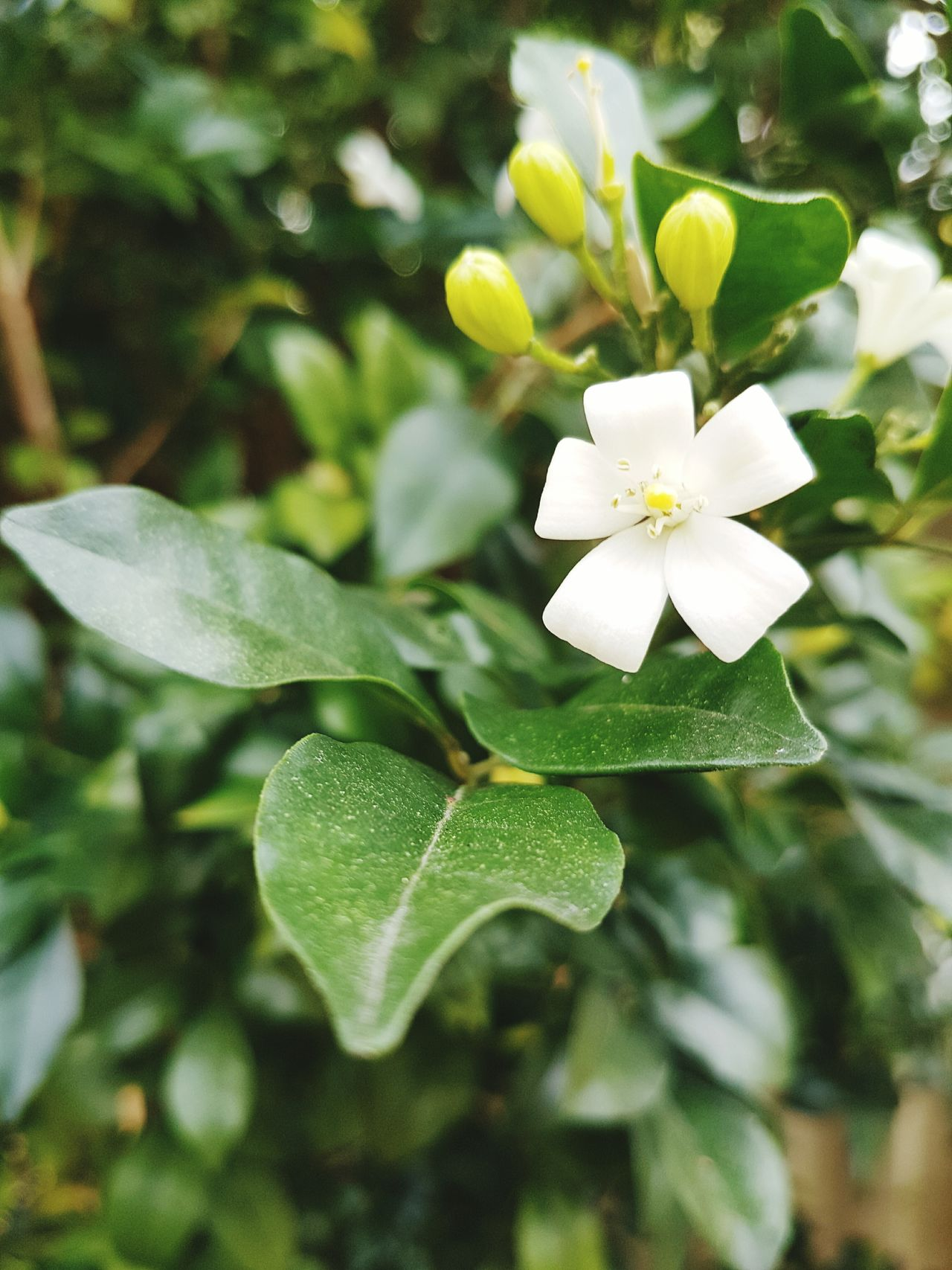 Nature Growth Freshness Flower Beauty In Nature Plant Close-up Leaf No People Fragility Outdoors Flower Head Day War