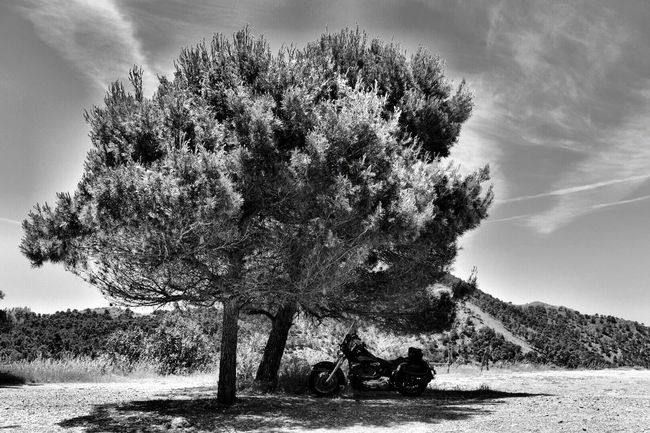 Motorcycle & Tree Happy Hot Day Freedom Harley Harleydavidson Harley Davidson Riding My Motorcycle Eyemphotos Eye4photography  Eyemphotography EyeEm Gallery Andalusia Andalucía Nature Beautiful Nature Eyem Gallery Happy :) Riding Andalucía Sunday Morning SPAIN Blackandwhite Sunday Clouds And Sky Light And Shadow Beauty In Nature