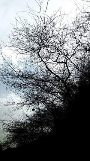 Sky Tree Nature Outdoors No People Cloud - Sky Close-up Beauty In Nature Day Nature_perfection Nature Photography Beauty In Nature Nature Fragility Blackandwhite Photography Trees And Sky