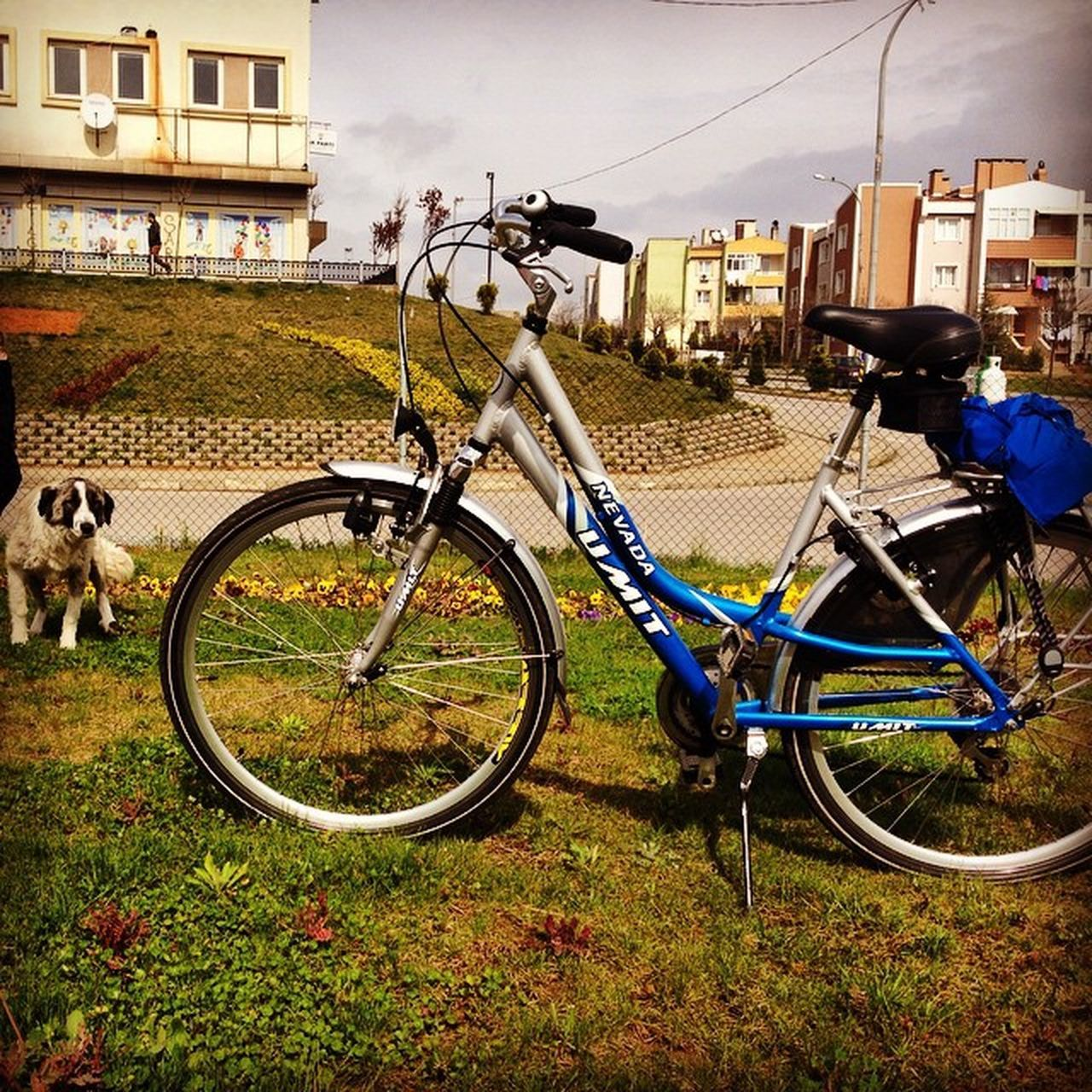 Bike Dog City Life Bisikletimvben @vestel