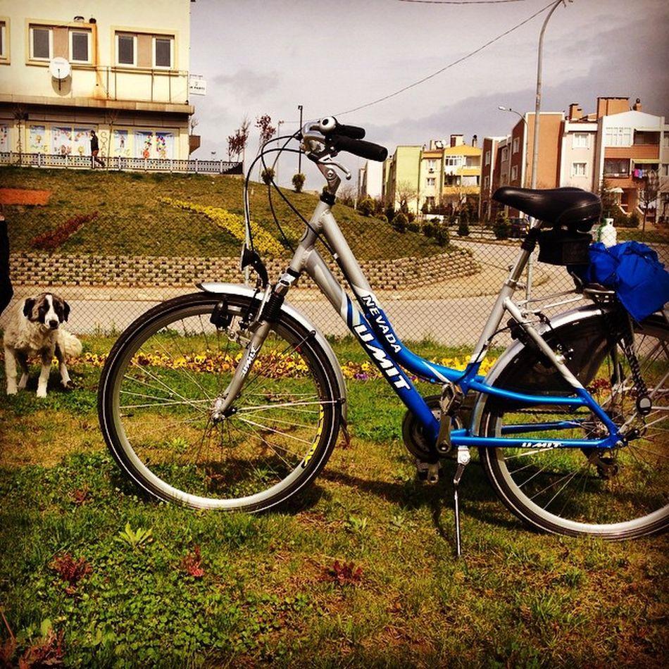 Bike Dog City Life Bisikletimvben @vestel