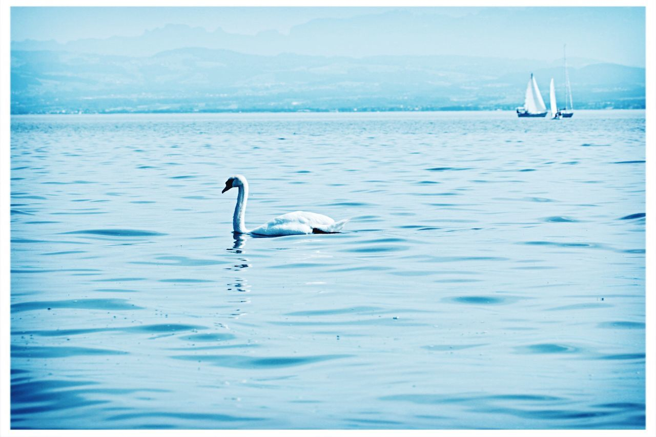 Swan lake. Lakeconstance Bodensee At The Lake Walking Around Taking Photos EyeEm Nature Lover Beautiful Nature Tadaa Community Have A Nice Day♥ Whatever