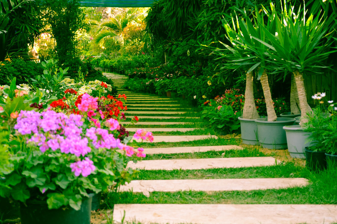Garden Path Beauty In Nature Best EyeEm Shot Flower Flower Head Freshness Garden Garden Flowers Garden Path Garden Photography Green Color Growth Leaf Natural Beauty Nature Nature Photography Nature_collection No People Outdoors Pink Color Plant Tree