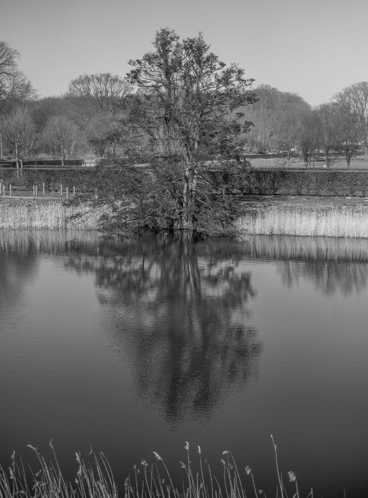 Beauty In Nature Blackandwhite Clear Sky Copy Space Day Growth Lake Landscape Landscape_Collection Nature No People Outdoors Plant Reflection Reflections Reflections In The Water Scenics Sky Tranquil Scene Tranquility Tree Water