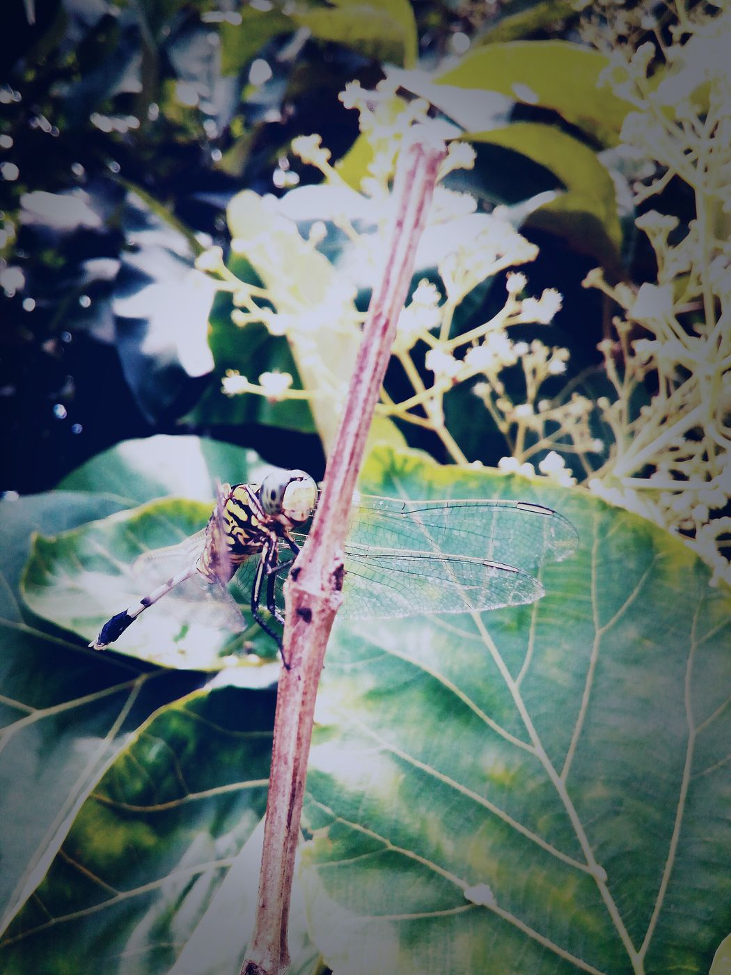 CreatureCreation Flies Must Live FlyHigh 8MP Photography Micromaxcanvas PhonePhotography CamuCamu Leaveschangingcolors Freshness Beauty In Nature Nature Morningclicks📷