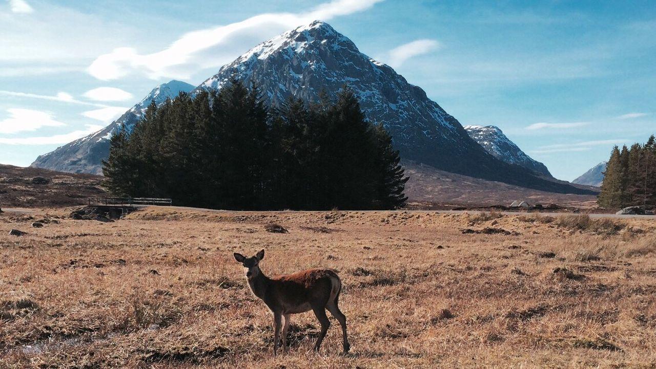Beautiful stock photos of leinwand, animal themes, one animal, landscape, mountain