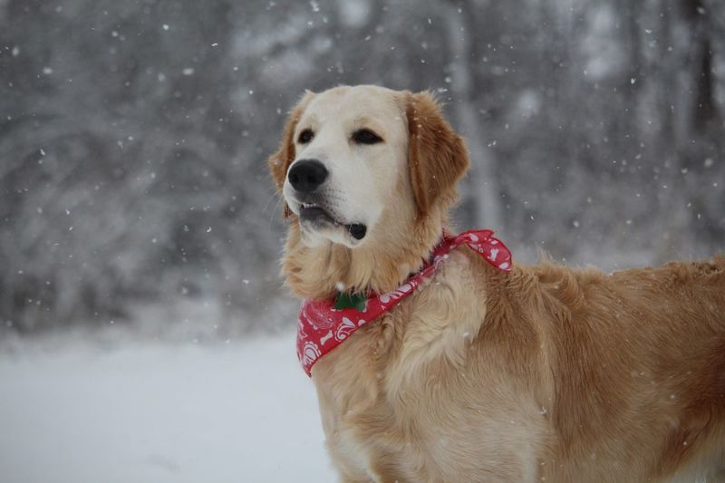 It's Cold Outside Snow Dog Doginsnow First Time Is Snow Like Follow Popular Photos Puppy's first time in snow! Bbbrrrr!!!
