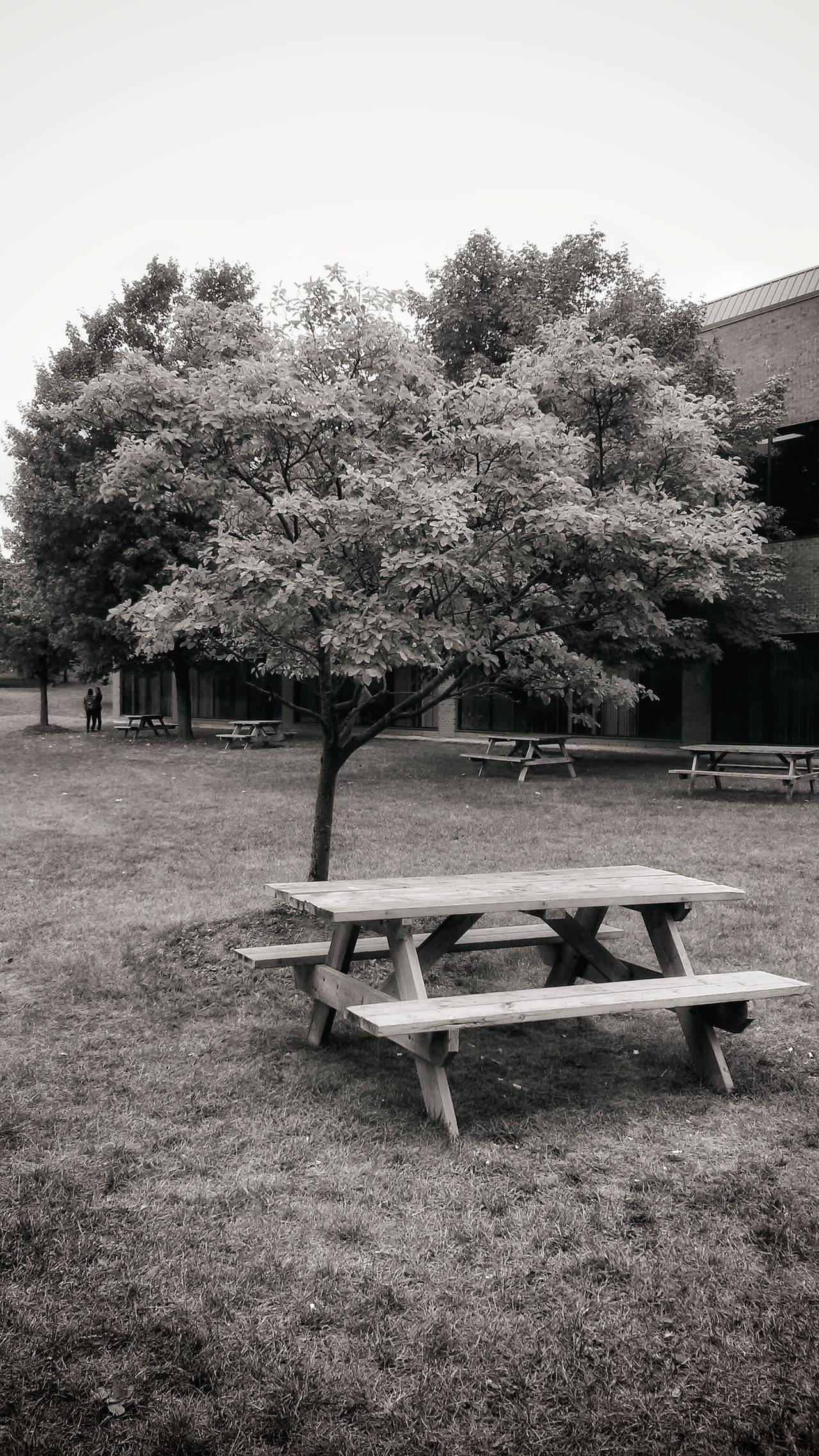 Tree Outdoors Day No People Bench