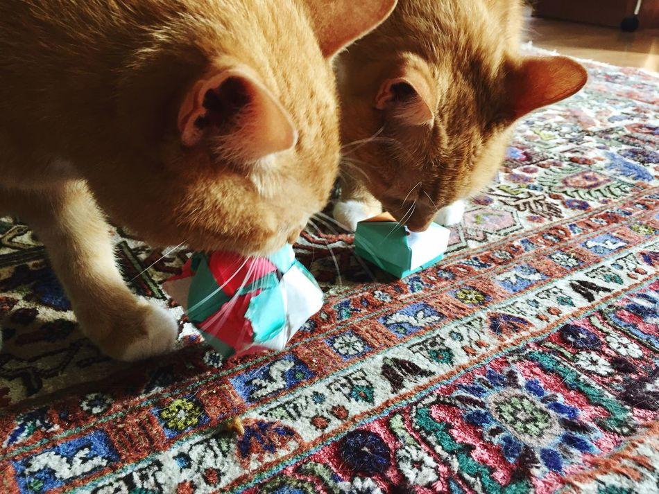 Playtime Domestic Cat Playing Cat Origami Art Cat Toy Katzenleben From Myself Katz