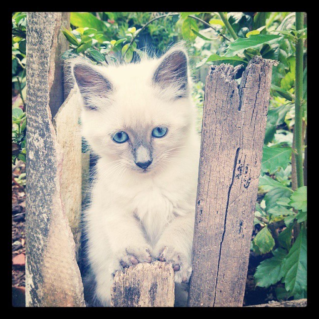 Cat Manhoso Demais!  kkkkk
