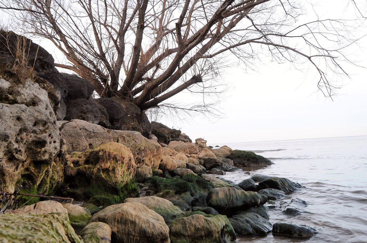 nature, sea, beauty in nature, tranquility, horizon over water, water, tranquil scene, scenics, bare tree, rock - object, tree, clear sky, no people, sky, outdoors, day, branch