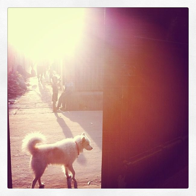 Sun Ray Winter Evening Leica Dog Street Home Chaktai Chittagong City Instagram