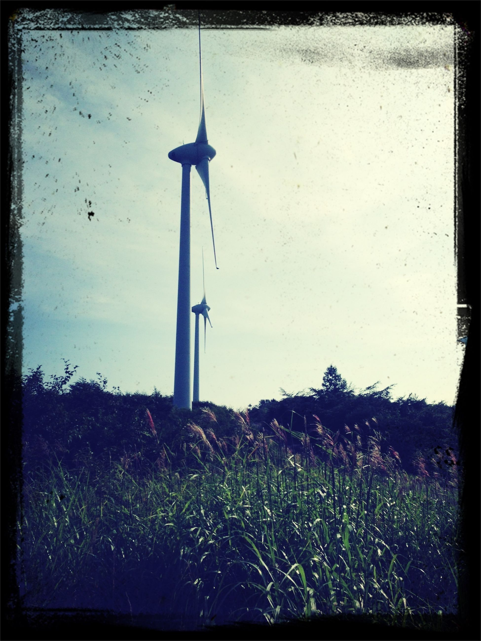transfer print, auto post production filter, field, wind power, alternative energy, sky, wind turbine, renewable energy, environmental conservation, windmill, grass, rural scene, fuel and power generation, growth, plant, landscape, nature, technology, low angle view, tree