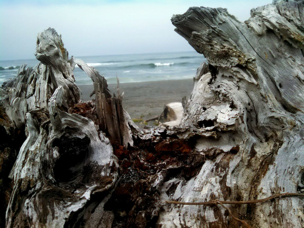 Eyeem Photography EyeEm Best Shots - Nature EyeEm Nature Lover No People Lobuephotos Motorola Mobile Photography Smartphonephotography Exploring From My Point Of View Enjoying Life California Humboldt County Dry Lagoon Beach Walk Driftwood Pacific Ocean Ocean View Using Nature