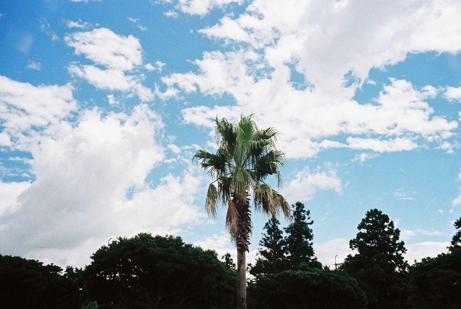 Korea JEJU ISLAND  Jeju Island, Korea Film Photography Film Filmcamera Photography Beauty In Nature Memories Travel Summer Happy Clear Sky Tree Day After The Rain 😚
