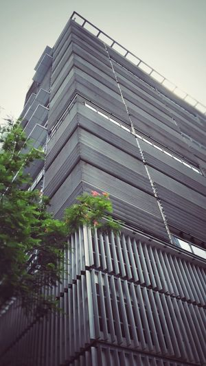 Architecture Low Angle View Built Structure Building Exterior No People Outdoors Sky Modern Day Skyscraper Tree EyeEm Selects