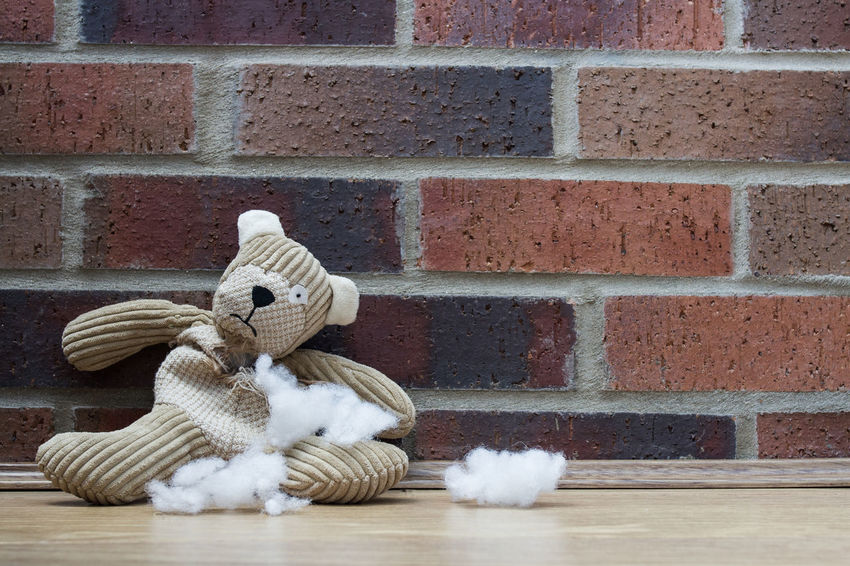 A sad and abandoned teddy bear with stuffing and filling falling from a ripped and torn hole in his tummy and waiting alone to be rescued and repaired. Abandoned Alone Cotton Wool Cuddly Toy Damaged Discarded Dog's Toy  Filling Fix  Help Hole Repair Rip Sad Sadness Seamstress Soft Toys Stitch Stitches Stuffing Tattered Tatty Tear Teddy Bear Torn