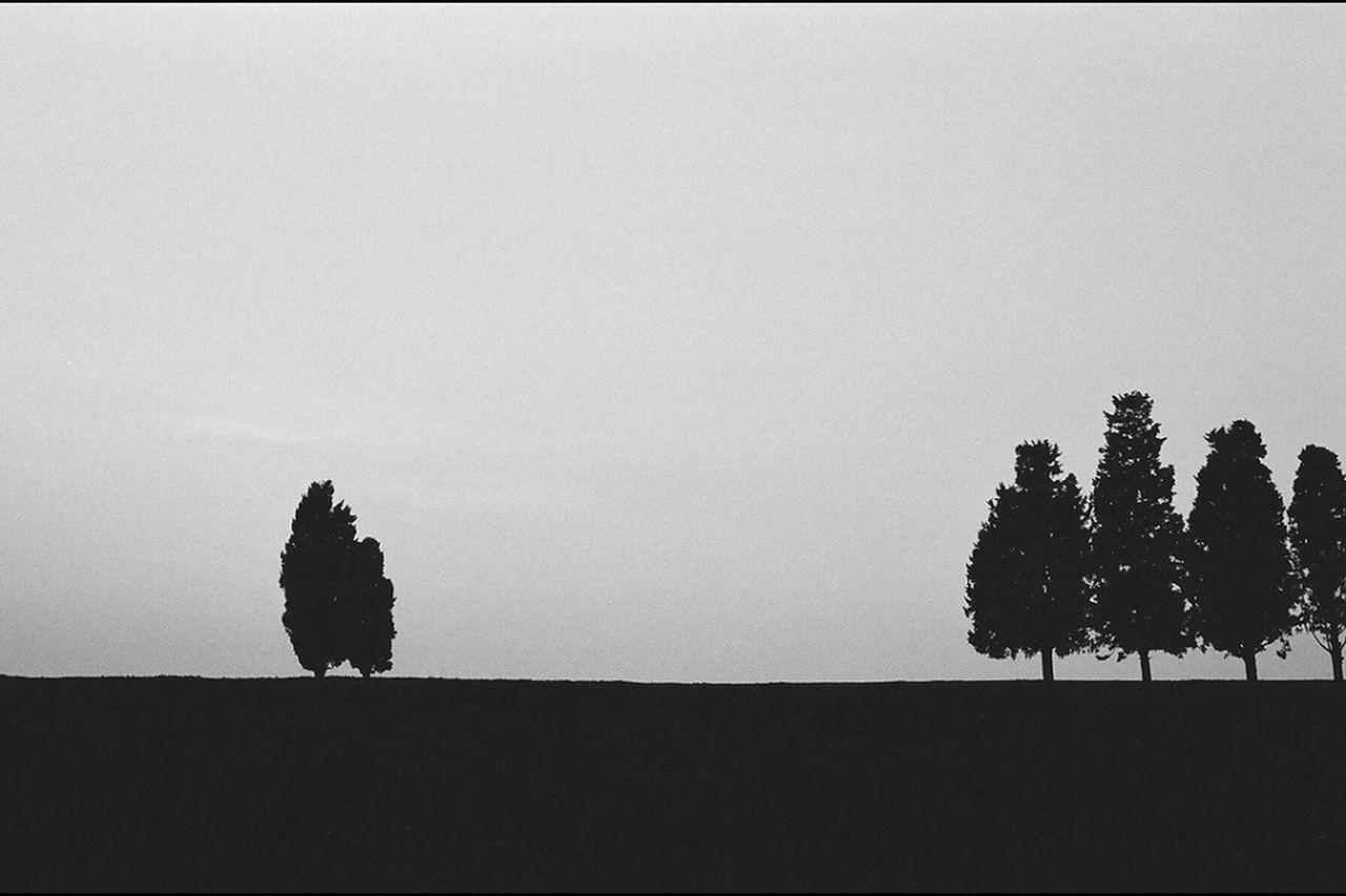 The Environmentalist – 2014 EyeEm Awards Calmintrees Nature Bw