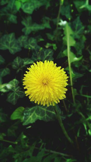 Taking Photos Htcphotography Flowers Enjoying Life Spring Flowers