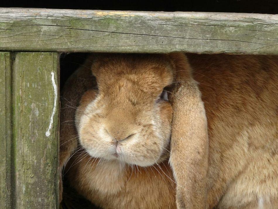 Beautiful stock photos of rabbit, Animal Head, Animal Themes, Animals In The Wild, Close-Up