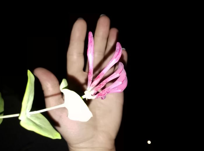 Yo Plant...give Me Five! Five Fingers Human Body Part One Person Human Hand Black Background People Pink Color Fingernail Close-up Plant Flower Coming Out Flower Touch Hand Shake Give Me Five Handy Shot Huawei G7