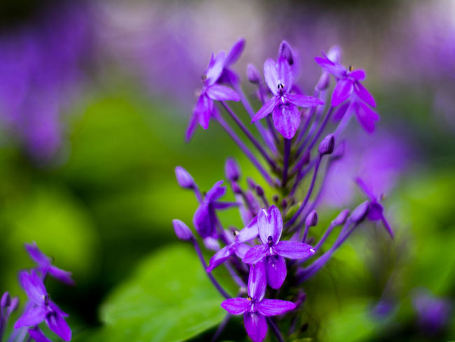 Beauty In Nature Blooming Blossom Botany Close-up Day Flower Flower Head Focus On Foreground Fragility Freshness Growth In Bloom Nature Nature's Diversities Petal Pink Color Plant Purple Selective Focus Softness Stem The Essence Of Summer The Great Outdoors - 2016 EyeEm Awards Tranquility