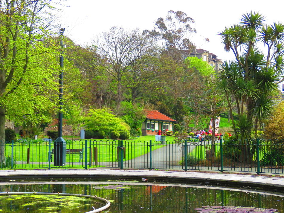 Taking Photos Local Park Colourful Fishpond Warm Summer Day Paths Bushes And Trees Green Lawns Colourful Flowers Benches & Branches Tearooms