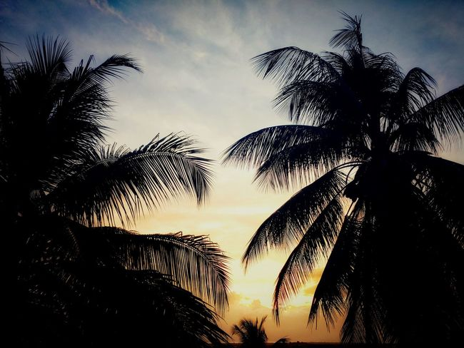 sunset EyeEm Nature Lover Tobago Flora Tobagoisland Caribbean Sunset Silhouettes Caribbean Nature Sunlight Flora Photography #trees And Sky Flora Tree Caribbean Sun Trees #naturelove Sky Outdoor Photography Enjoying Life Tobagolove #Nature  Eye Em Nature Lover Outdoors Nature
