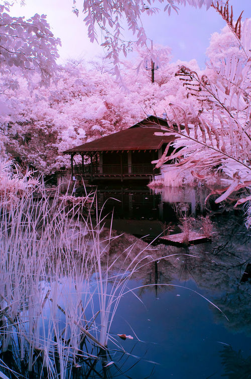 Infrared Photography Foliage Plant Branches And Leaves Outdoor Park Hut Wooden House Colorful Nature Water Sky Pretty In Pink