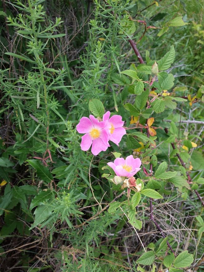 Beauty In Nature Day Flower Fragility Growth Nature No People Outdoors Plant