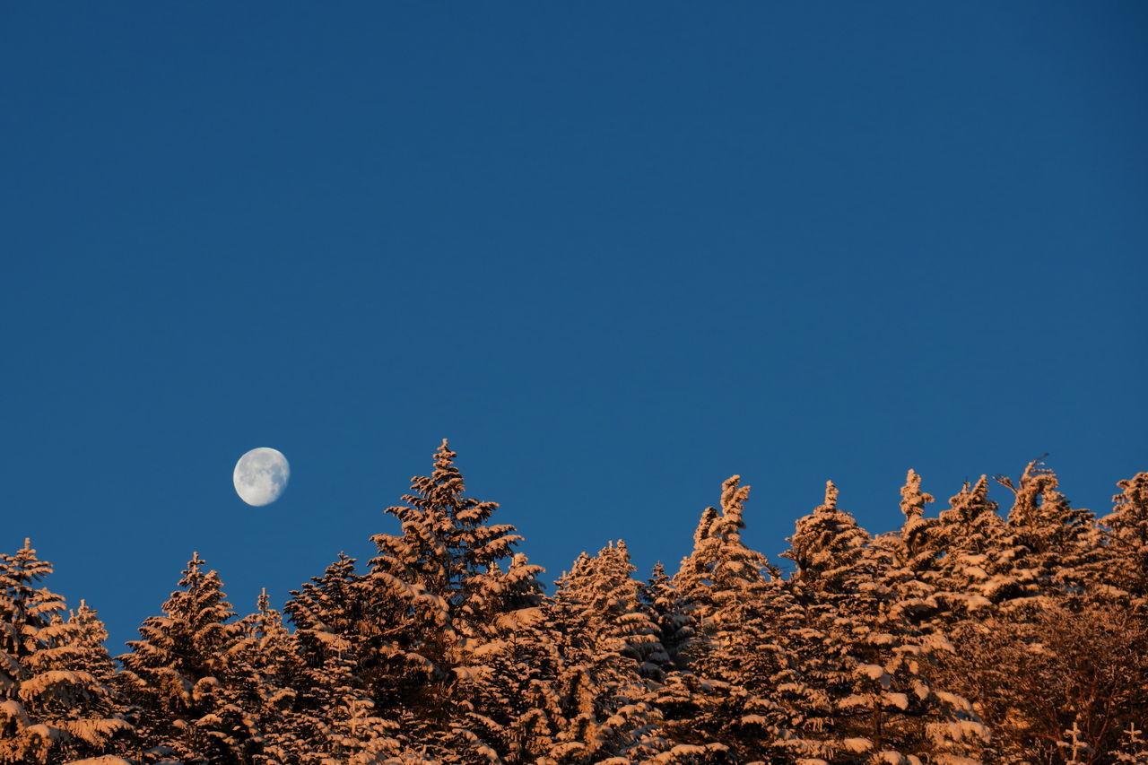 有明の月 Morning Moon Morning Day Break Moon Blue Sky Tree Veitch Fir Forest Snow Snow Mountain Winter EyeEm Best Shots Beauty In Nature EyeEm Nature Lover PowerShot G3 X