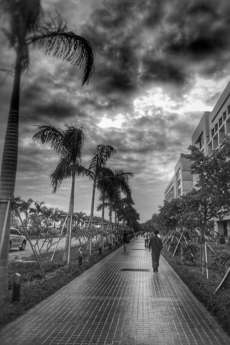 Palm Tree Tree Cloud - Sky The Way Forward Built Structure Architecture Incidental People Sky Building Exterior Water Diminishing Perspective Growth Tree Trunk Cloudy Day Outdoors Footpath Tranquility Cloudscape