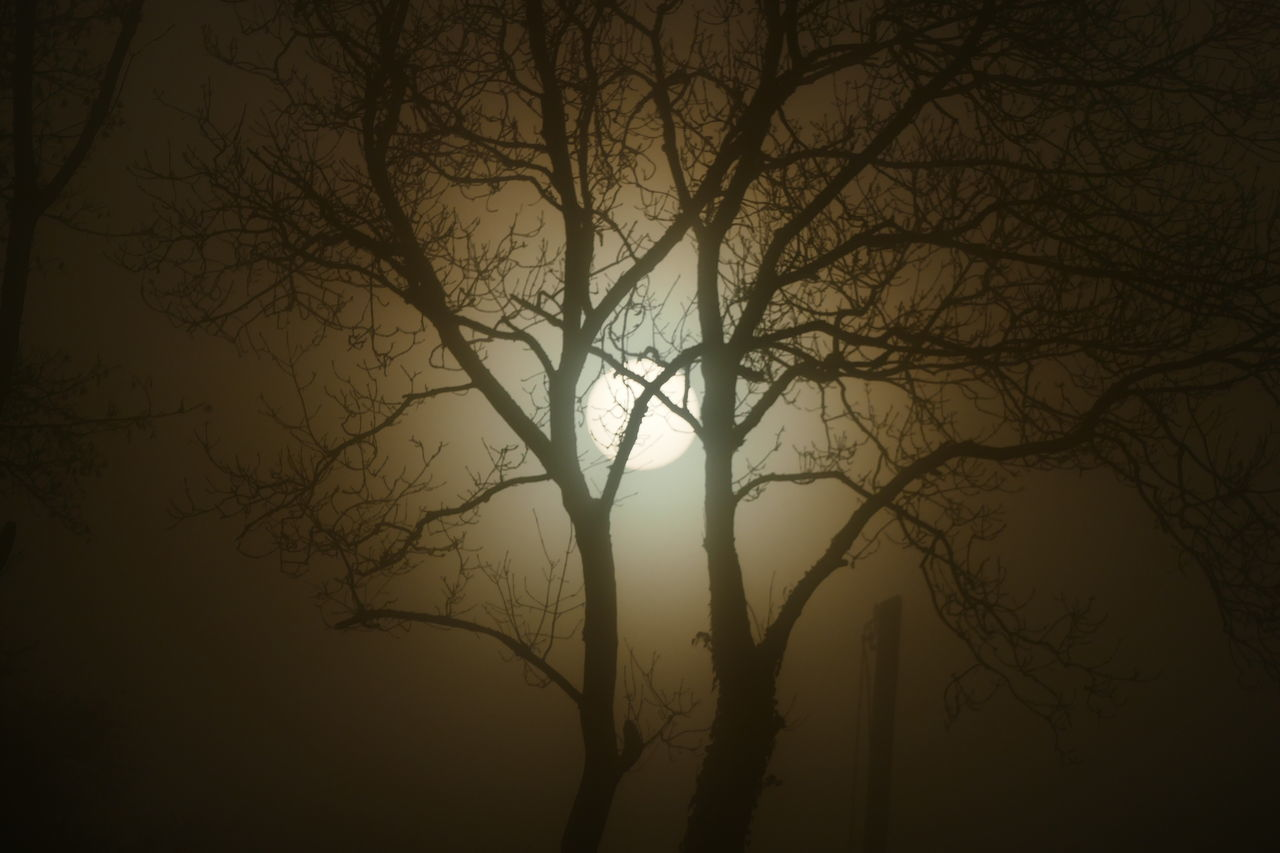 Foggy day.. Bare Tree Beauty In Nature Branch Day Dream States Ethereal Fog Foggy Foggy Weather Forest Nature No People Outdoors Scenics Silhouette Silhouette Silhouette_collection Sky Softness Sunset Tranquil Scene Tranquility Tree Tree Trunk