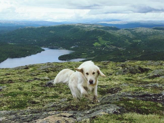 Mountain view and a jumping Texas Mountain View Norway Dog Nature