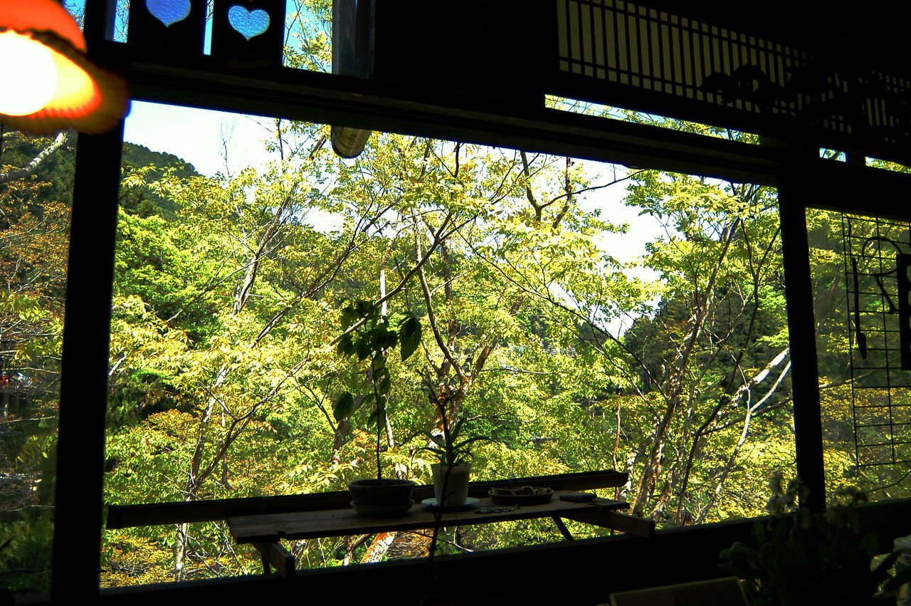 Beauty In Nature Branch Day Freshness Growth Indoors  Low Angle View Nature No People River Side House Tree Window View