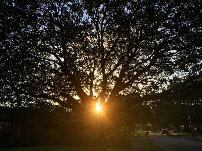 Morning sunrise 🌅