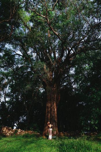 Arboles Argentina Iguazu Lights Nature Orange Ruins Selva South America Southamerica Sunlight Trip
