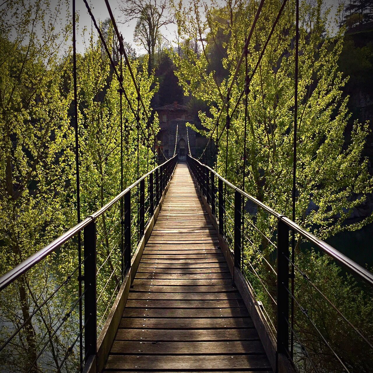 bridge - man made structure, the way forward, railing, tree, forest, built structure, connection, footbridge, nature, outdoors, architecture, day, growth, tranquil scene, tranquility, beauty in nature, wood paneling, suspension bridge, no people, sky