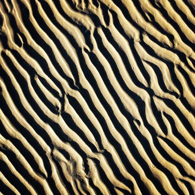 TakeoverContrast Fresh On Eyeem  Beach Sea Dunes
