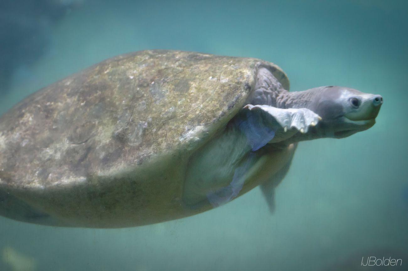 Metro Zoo Underwater Life Turtle