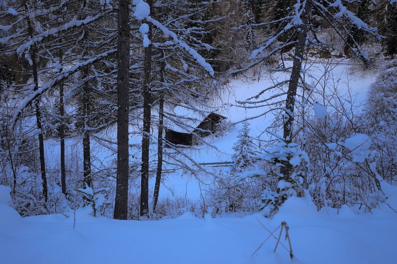 Secluded Little alpine cabin. Alps Bare Tree Blue Hour Cabin Chalet Cold Temperature Dusk Eye4photography  EyeEm Best Shots EyeEm Nature Lover Forest Hut Loneliness Lonely Nature Nightfall No People Outdoors Prättigau Remote Secluded  Snow Switzerland Weather Winter