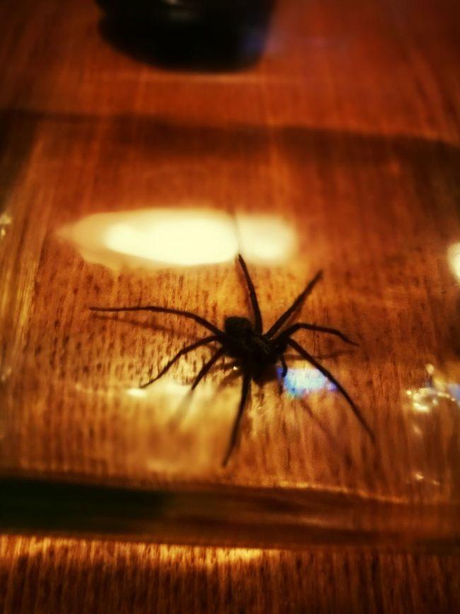 Spider in a jar